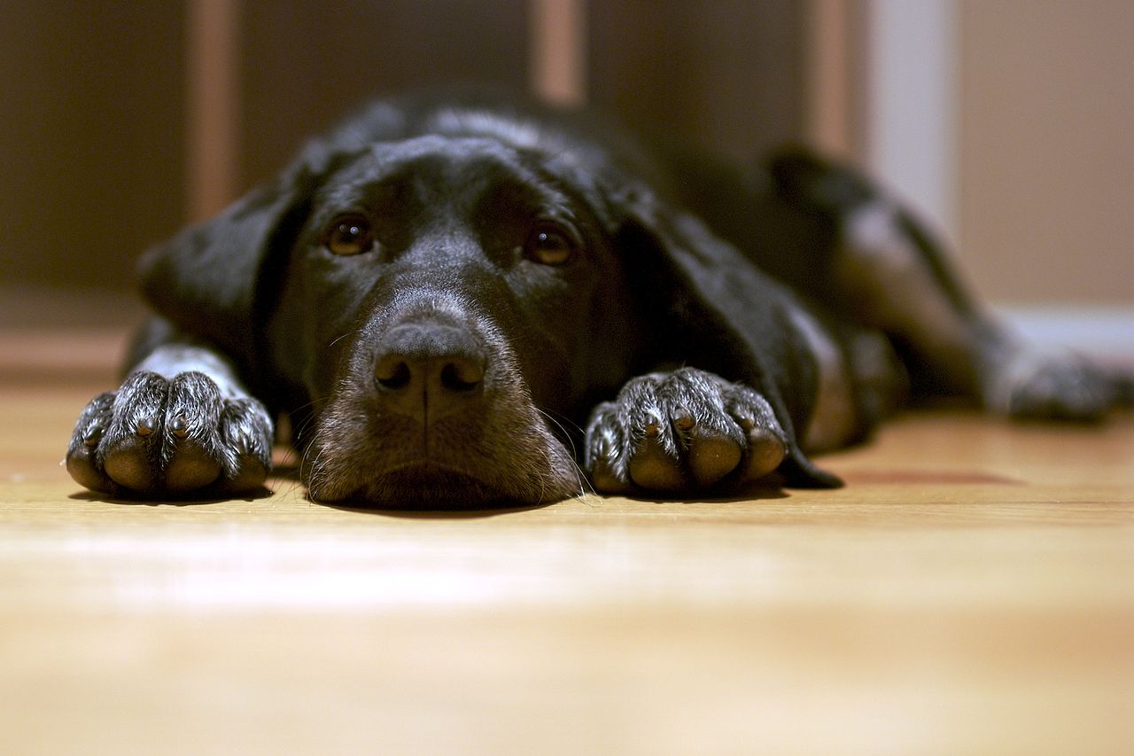 what are essentials to look for in a vet